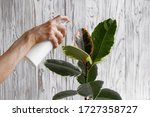 Woman Hand Spraying Leaves Of...