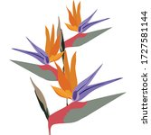 Bird Of Paradise Flower....