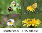 Main four groups of insect flower pollinators Hymenoptera, Lepidoptera, Diptera and Coleoptera