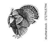 Hand Drawn Turkey. Poultry....