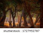 Forest Mana Pools Np  Zimbabwe...
