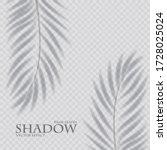 palm leaf shadow transparent...   Shutterstock .eps vector #1728025024
