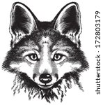 vector sketch of a red fox's... | Shutterstock .eps vector #172803179