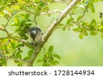 A Cute Little Tufted Titmouse...