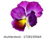Macro Closeup Of Pretty Purple...