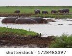 Small photo of Group of hippos near hippo pool waterhole in arcane savanna