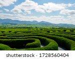 The peace maze in castlewellan  ...