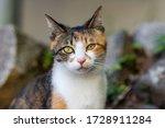 Feral Cat Portrait Close Up On...