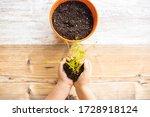 Little Kid Planting A Lentils...