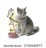 Bowl With Pet Food And Cute Cat ...