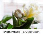 macro white peony flowers... | Shutterstock . vector #1729093804