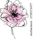 watercolor peony flower. hand... | Shutterstock .eps vector #1729171477