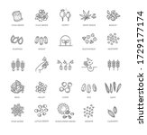 plant seed vector icon set | Shutterstock .eps vector #1729177174