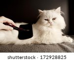 Woman Combing Fur Of A White...