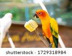 Pair Of Lovebird A Bright...