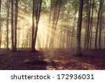 autumn forest trees. nature... | Shutterstock . vector #172936031