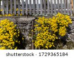 Yellow Flowering Plant Grows O...