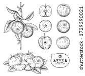 vector sketch apple decorative... | Shutterstock .eps vector #1729390021