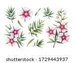 manuka honey branch  leaves and ... | Shutterstock . vector #1729443937