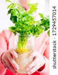 Small photo of Growing celery. Woman holding in her hands the glass bottle with the celery plant inside. Home gardening concept.