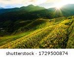 Image Terraced Rice Fields ...