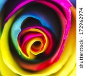 Small photo of Rainbow Rose Flower Square