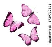 Pink Tropical Butterflies...