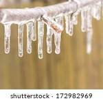 Ice Coated Tree Branch After A...