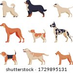 purebred dogs collection ... | Shutterstock .eps vector #1729895131