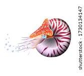 chambered nautilus pompilius....   Shutterstock .eps vector #1730134147