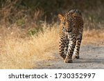 This Photo Is Of A Leopard...