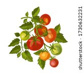 branch tomato  plant tomatoes... | Shutterstock .eps vector #1730632231