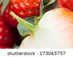 fresh strawberry | Shutterstock . vector #173065757