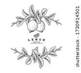 vector sketch citrus fruit... | Shutterstock .eps vector #1730914501