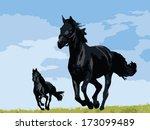 Mustang Horses Running