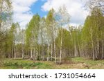 spring forest landscape with... | Shutterstock . vector #1731054664