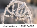 Thick Hoarfrost On A Tangled...