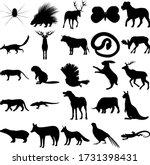Set Of 25 Animals. Spider ...
