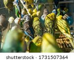 A Group Of Budgerigars Stickin...