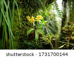 A Epiphyte Orchid With Yellow...