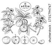vector sketch apple decorative... | Shutterstock .eps vector #1731794767