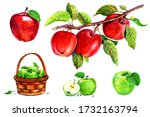 Apples In A Basket  Apples With ...
