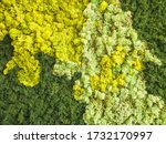 Decorative Green And Yellow...