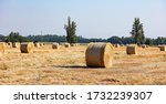Landscape With Round Bales Of...