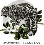 Full Length Jaguar Walking...