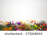 Stock photo flower garden 173268044