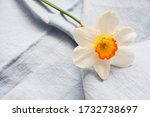 White Yellow One Daffodil...