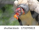 Small photo of A King Vulture (Sarcoramphus papa) with the characteristic yellow fleshy caruncle on its beak, in captivity