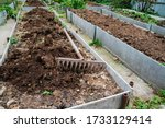 The Vegetable Bed Is Fertilize...