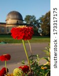 Red Zinnia Blooming by Washburn Observatory on Observatory Hill, University of Wisconsin-Madison - stock photo